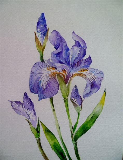 The Watercolour Flower Artist S Bible the world s most recently posted photos by pradeepa rupathilake flickr hive mind