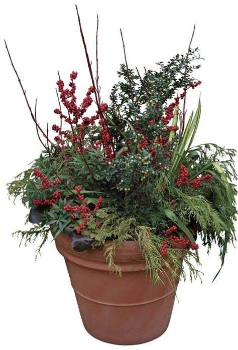 winter container gardens 17 best images about winter containers on
