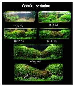 1000 images about aquascaping on
