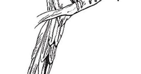 quetzal bird coloring page quetzal birds pictures quetzal bird coloring page