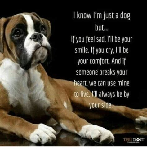 i ll be there to comfort you i know i m just a dog but if you feel sad li be your