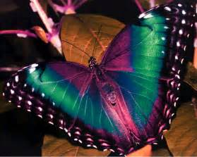 pictures of colorful butterflies beautiful colorful butterfly pictures 11 free hd wallpaper