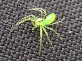 neon green spider flickr photo sharing