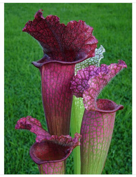 unique house plants best unusual house plants gardening forum