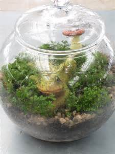 lets grow apothecary jar terrariums