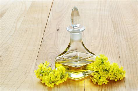 olio di colza alimentare acido erucico e olio di colza nuova valutazione efsa sui