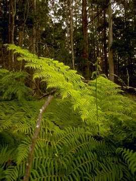 Which Biome Is Logging Hardwood Trees - coniferous plants