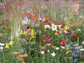 summer flower late summer flowers