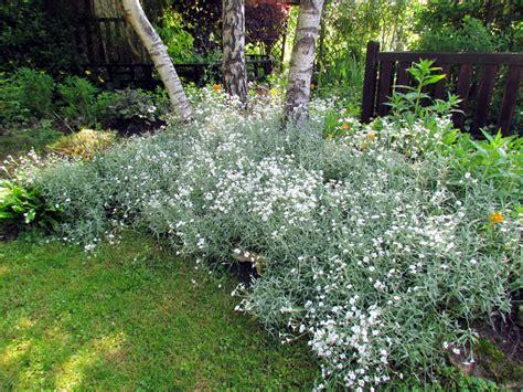 Plantes Tapissantes Sans Entretien by Nos Plantes Couvre Sol En Terrain Argileux Au Jardin De