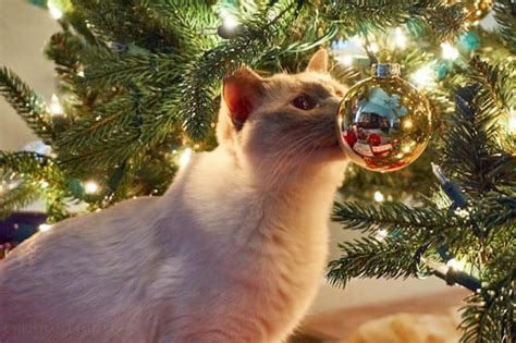 repel cat christmas tree 8 steps to cat proof and proof your tree