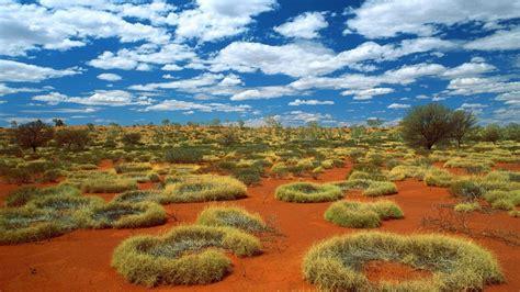 green wallpaper australia small rings of green grass in desert australia