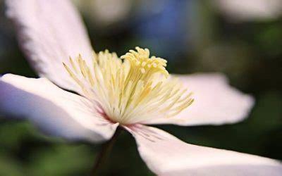 fiori facili da coltivare ecco 5 fiori estivi facili da coltivare tuttogreen