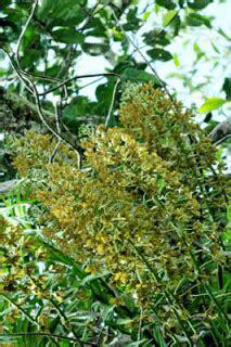 hidup semangat terus berusaha tumbuh tumbuhan langka indonesia