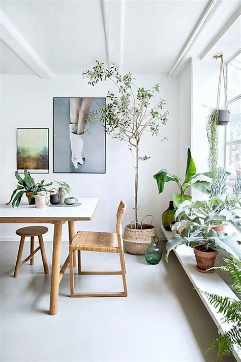 best living room plants 17 best ideas about olive plant on pinterest olive tree