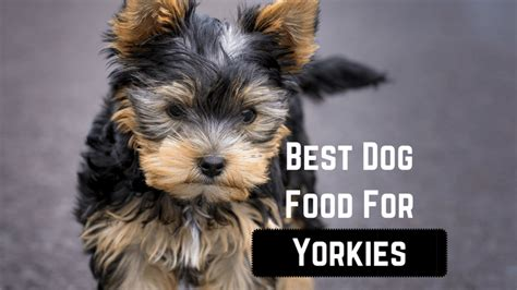 best food for yorkies with sensitive stomachs best food for yorkies smart owners