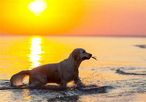 dog friendly beach house rentals pet friendly vacation rentals in northern michigan