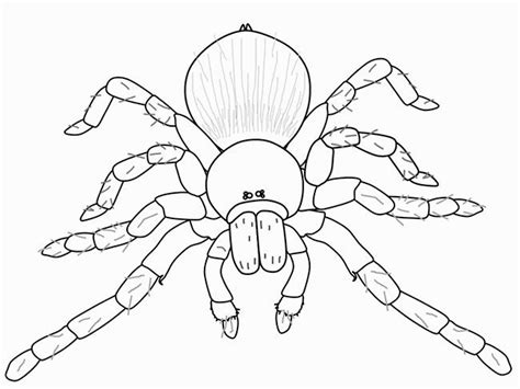 spider outline coloring page sumptuous design spider outline coloring pages printable