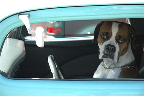 car dogs are teaching who leave dogs in cars a serious lesson