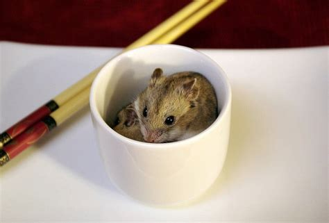 how to potty a in the winter 118 best images about hamsters on robo hamsters hamsters and winter