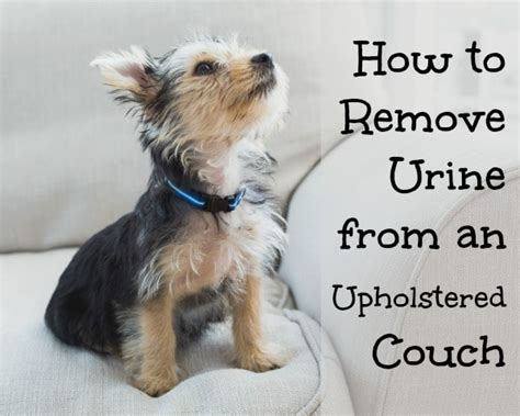 how to remove pet odor from microfiber couch virtu geo virtugeo info