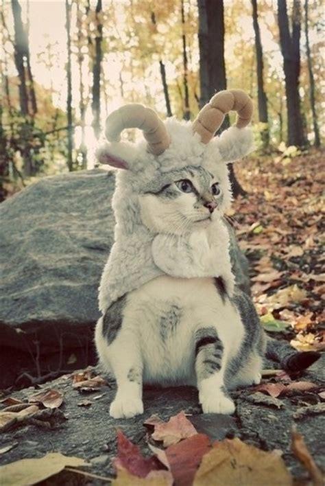 Pet Clothes Animal jacket pet cats animal clothing animal clothing cat