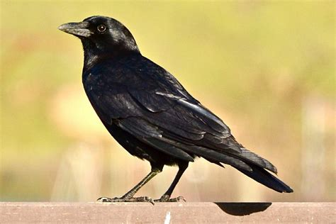 most common backyard birds most common backyard birds in the u s