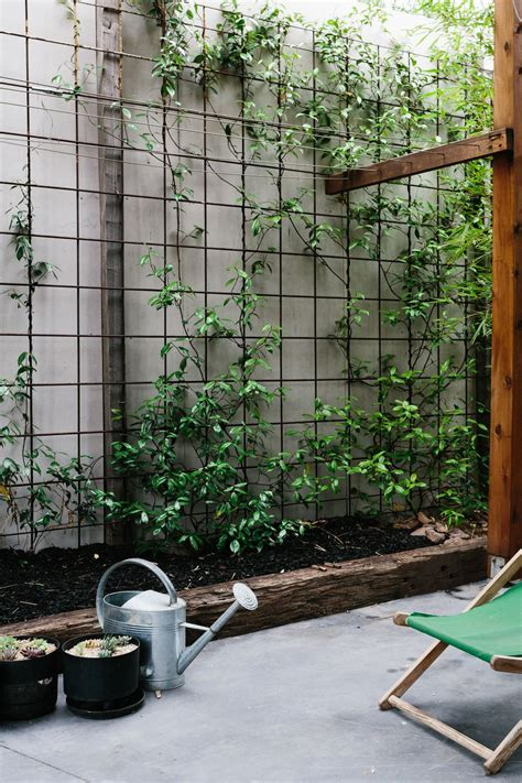 Garden Fence Screening Ideas Reo Mesh Used For Climbing Plants Pinned To Garden Design Walls Fences Outdoor Living