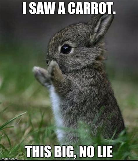 Meme Com - cute bunny memes imgflip