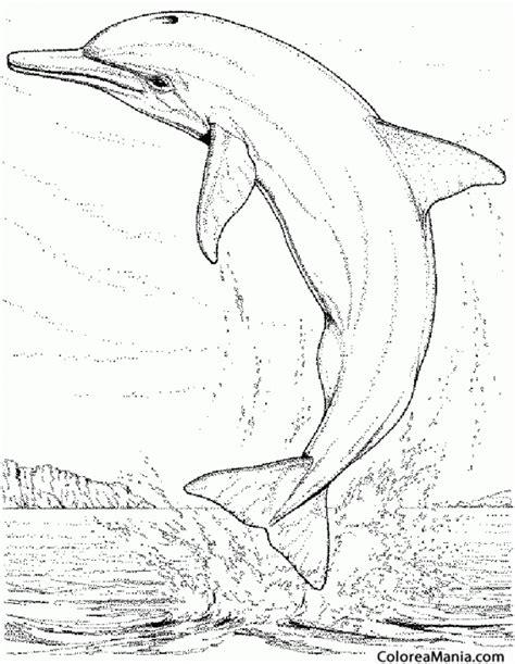 imagenes realistas para pintar colorear delfn saltando dibujo realista animales marinos