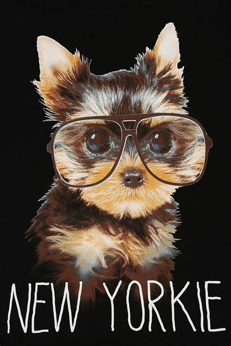 new yorkie outfitters new yorkie in black lyst
