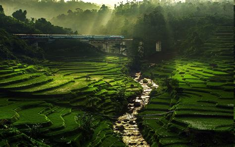 nature landscape rice paddy river sun rays field
