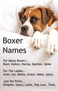 Popular boxer dog names for boy and girl boxers with discerning taste
