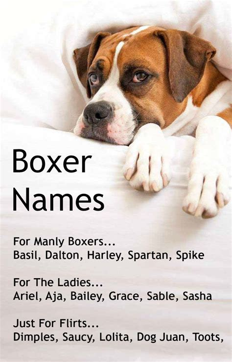boxer names pics for gt white baby boxer
