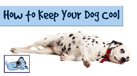 how to keep dogs cool in summer how to keep your cool in the summer heatwave dogs die in cars hang