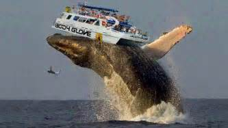 largest in the world world s biggest animal 2016 youtube