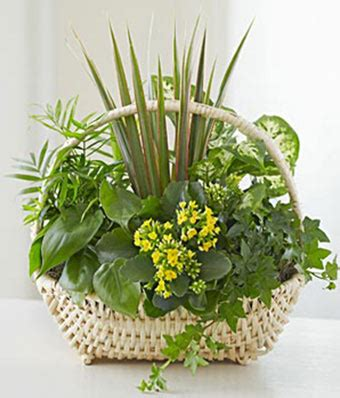 european dish garden at from you flowers