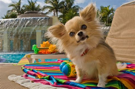hotels that accept dogs vacation frendly hotel for your pets top reviews