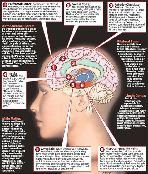 sections of the brain and their functions amazing facts about male and female sexuality in bedroom