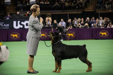 rottweiler lymphoma 3 of the most and least expensive breeds