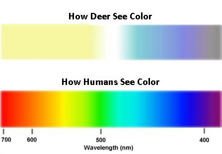 what colors do deer see tinte rgb rosso giallo e diffusori colorati come