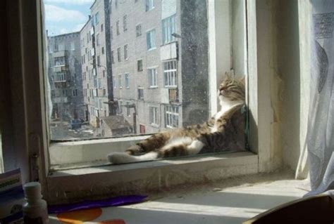 Window Seat With Radiator - cat in the window funny pictures of animals