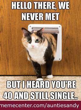 Funny Cat Lady Memes - 25 best ideas about fat cat meme on pinterest