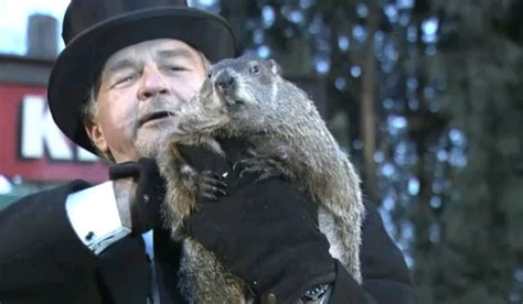 groundhog day live 2016 wkyc groundhog day 2016 no shadow means early