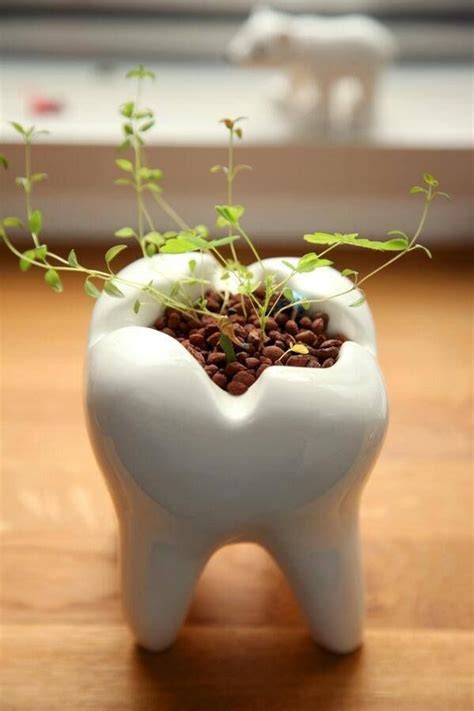 tooth shaped planter 25 best ideas about dental office decor on pinterest