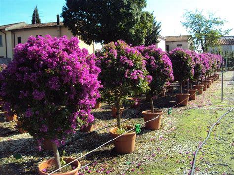 fiori e piante bologna vivaio piante a bologna