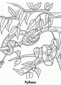coloring pages endangered animals free coloring pages of rainforest animals