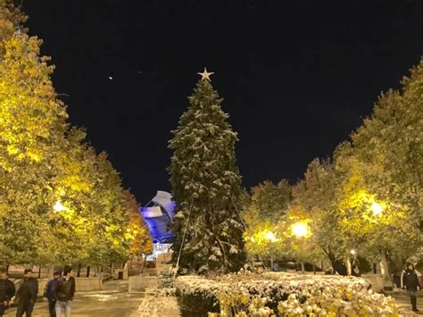 After 48 Years The Chicago Christmas Tree Is Back Is Home Tree Lighting Chicago