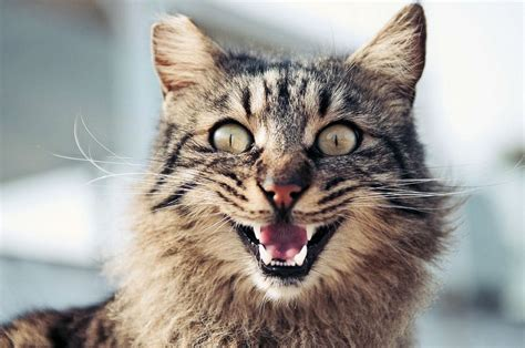 fensterbrett katze the 11 cat sounds and what they the purrington post