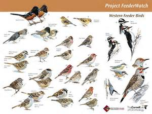 Backyard Bird Identification by Great Site For Backyard Bird Id Bird