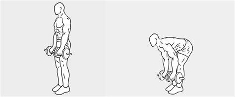 esercizi lombari a casa tutti gli esercizi per i lombari immagini esercizi palestra